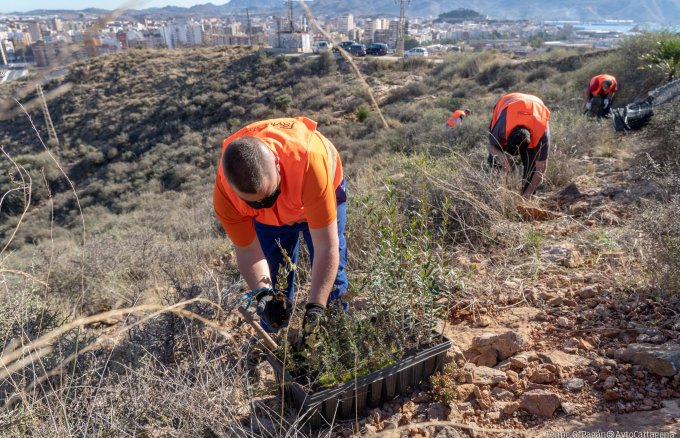 Workers carrying out the reforestation work promoted by Repsol Foundation and the Cartagena City Council.