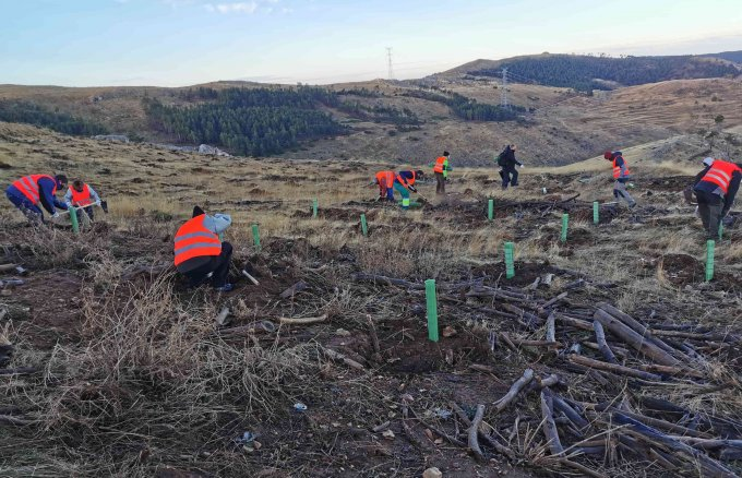 Repsol Social Impact, Sylvestris and Land Life Company will boost together reforestaton projets in Iberia and Latin America